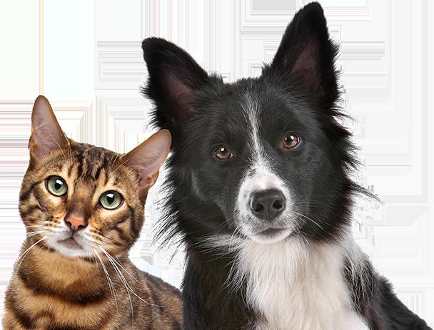 Cat & Dog Posing