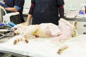 pet surgery alexander animal hospital severna park md maryland