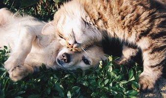 How to Keep Your Pets Safe This Summer