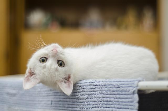 feline allergies cats alexander animal hosptial