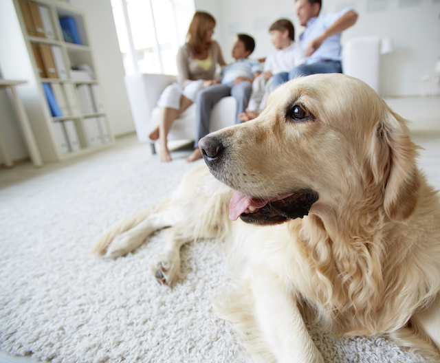 Helping Your Pet Deal with Anxiety