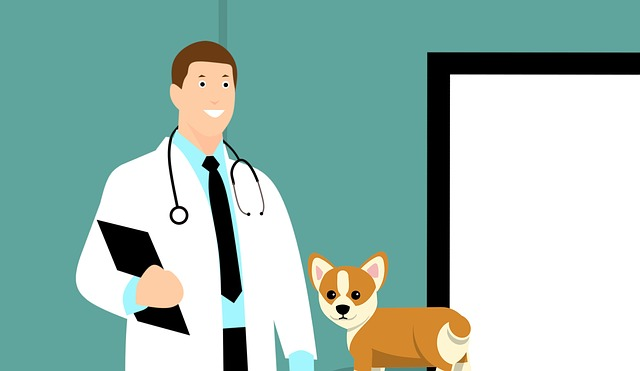 The Importance of Checkups for Your Furry Friend