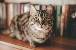 Human Foods that Can Harm Your Cat