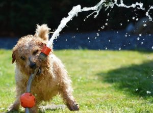 Keeping Your Pooch Cool During the 'Dog Days' of Summer