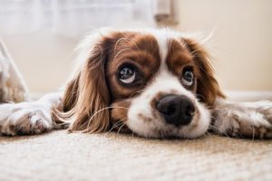 Can Your Dog Safely Eat Cat Food?