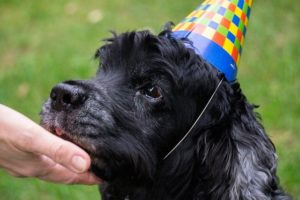Good Advice for Taking Care of Senior Dogs