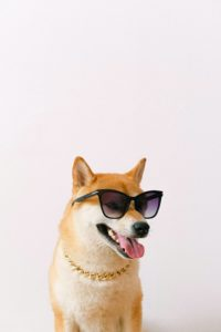 Helping Your Dog Beat the End-of-Summer Heat