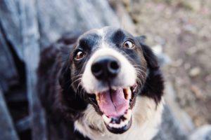 Dental Care Basics for Your Dog