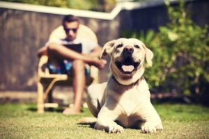 how to prevent your dog from overheating