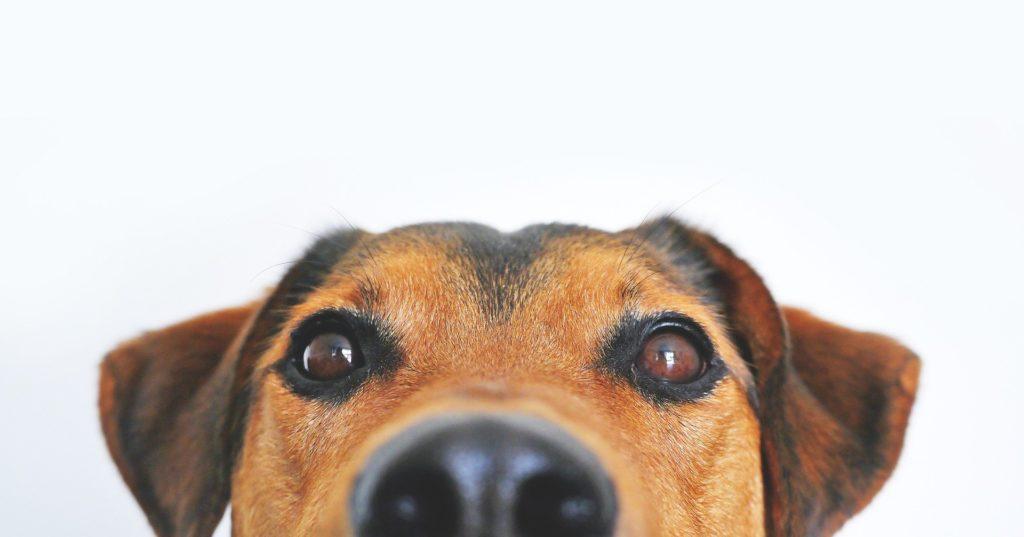 dogs dog separation anxiety alexander animal hospital severna park
