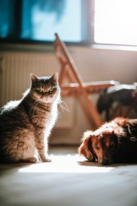 Pet Care Tips: How to House Train Them