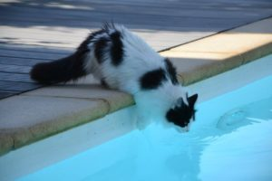 In fact, there are some easy and effective ways to encourage your precious kitty to learn how to swim.