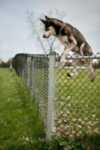 canine aggression dog behavior alexander animal hospital