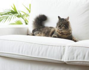 cat pet health natural remedies alexander animal hospital severna park md