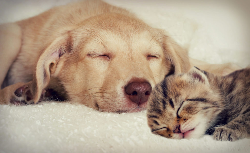 alexander animal hospital pet care pets severna park md maryland