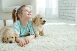 family pets baby alexander animal hospital
