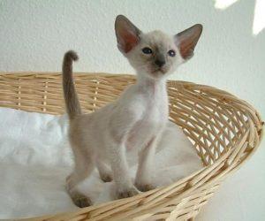 kity cat care alexander animal hospital severna park md maryland